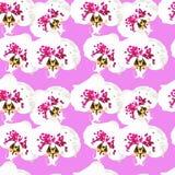 Ορχιδέα Άνευ ραφής σύσταση σχεδίων των λουλουδιών ανασκόπηση floral Στοκ εικόνες με δικαίωμα ελεύθερης χρήσης