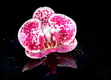 Ορχιδέα λουλουδιών στις πτώσεις νερού Στοκ φωτογραφία με δικαίωμα ελεύθερης χρήσης