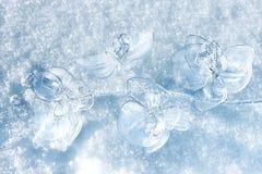 Ορχιδέα στο χιόνι Στοκ εικόνα με δικαίωμα ελεύθερης χρήσης
