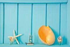 οστρακόδερμα θάλασσας διακοσμήσεων Στοκ Εικόνες
