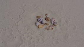 Οστρακόδερμα που θάβονται στην άμμο στα κοχύλια απόθεμα βίντεο