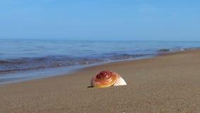 Οστρακόδερμα στην ακτή φιλμ μικρού μήκους