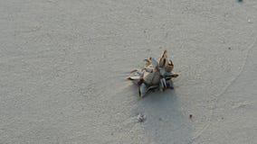 Οστρακόδερμα στην παραλία απόθεμα βίντεο