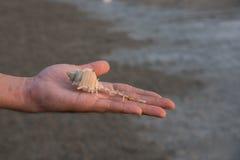 Οστρακόδερμα σε διαθεσιμότητα Στοκ Φωτογραφίες