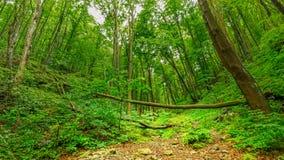 Ουγγρικό δάσος Στοκ εικόνα με δικαίωμα ελεύθερης χρήσης