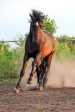Ουκρανικά άλογα φυλής αλόγων Στοκ εικόνα με δικαίωμα ελεύθερης χρήσης