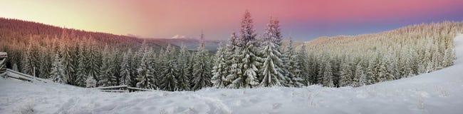Ουκρανικό Carpathians χιονώδες δάσος στοκ φωτογραφία