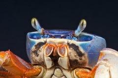 ουράνιο τόξο καβουριών Στοκ Εικόνες