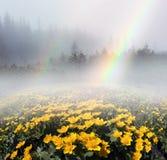 Ουράνιο τόξο με το kalyuzhnitsa άνθισης Στοκ φωτογραφία με δικαίωμα ελεύθερης χρήσης