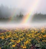 Ουράνιο τόξο με το kalyuzhnitsa άνθισης Στοκ εικόνα με δικαίωμα ελεύθερης χρήσης