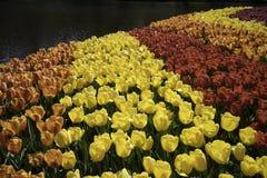 Ουράνιο τόξο λουλουδιών Στοκ Εικόνες