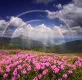 Ουράνιο τόξο πέρα από τα λουλούδια βουνών Στοκ Εικόνες