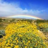 Ουράνιο τόξο πέρα από τα wildflowers της ερήμου της Καλιφόρνιας Στοκ Εικόνες