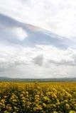 ουράνιο τόξο πεδίων λάχανω& Στοκ φωτογραφία με δικαίωμα ελεύθερης χρήσης