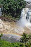 Ουράνιο τόξο στις πτώσεις Iguazu που αντιμετωπίζονται από τη Βραζιλία Στοκ Φωτογραφίες