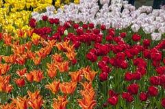 ουράνιο τόξο χρωμάτων Στοκ Φωτογραφίες
