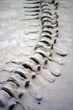 Ουρά δεινοσαύρων στοκ εικόνα