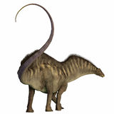 Ουρά δεινοσαύρων Amargasaurus Στοκ φωτογραφία με δικαίωμα ελεύθερης χρήσης