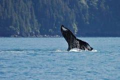 ουρά εμβύθισης 4575 humpback Στοκ εικόνες με δικαίωμα ελεύθερης χρήσης