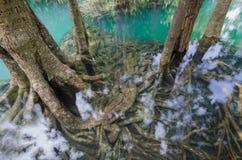 Ουρά φύσης Στοκ Φωτογραφίες
