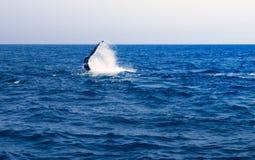 Ουρά Lobbing φαλαινών Στοκ φωτογραφία με δικαίωμα ελεύθερης χρήσης