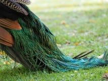 Ουρά Peacock στοκ εικόνα
