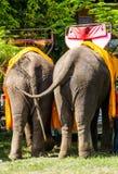 Ουρές ελεφάντων στοκ εικόνες