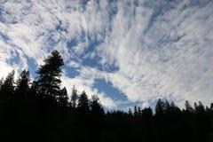 Ουρανοί Redwood Στοκ εικόνες με δικαίωμα ελεύθερης χρήσης