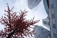 Ουρανοξύστες της Σιγκαπούρης που βλέπουν Στοκ Φωτογραφία