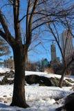 Ουρανοξύστες NYC πίσω από τα δέντρα στο Central Park Στοκ φωτογραφία με δικαίωμα ελεύθερης χρήσης