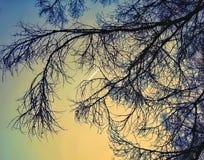 ουρανού κλάδων φύσης υποβάθρων κίτρινη φύση φθινοπώρου χρώματος ελαφριά Στοκ Φωτογραφίες