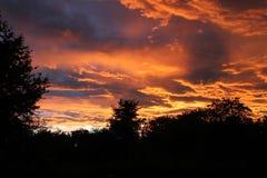 Ουρανός, δέντρα, φθινόπωρο, ομορφιά, κόκκινο, βράδυ, απίστευτος, θαυμάσιος, όμορφο, φύση Στοκ Φωτογραφίες