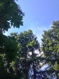 Ουρανός δέντρων στοκ φωτογραφία με δικαίωμα ελεύθερης χρήσης