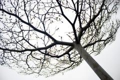 ουρανός αγγειακός στοκ φωτογραφίες με δικαίωμα ελεύθερης χρήσης
