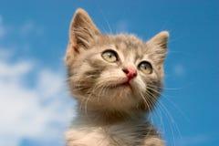 ουρανός γατακιών Στοκ φωτογραφίες με δικαίωμα ελεύθερης χρήσης