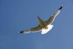 ουρανός γλάρων Στοκ εικόνες με δικαίωμα ελεύθερης χρήσης