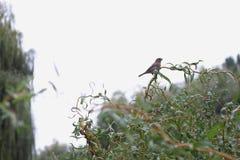 Ουρανός δέντρων κλάδων συνεδρίασης σπουργιτιών πουλιών Στοκ φωτογραφία με δικαίωμα ελεύθερης χρήσης