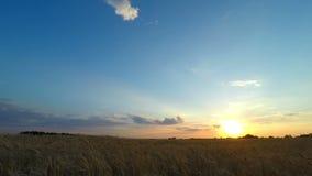 Ουρανός ηλιοβασιλέματος πέρα από έναν τομέα σίτου φιλμ μικρού μήκους