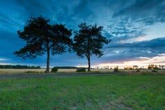 Ουρανός ηλιοβασιλέματος πέρα από τα παλαιές δέντρα και την επαρχία πεύκων Στοκ Εικόνα