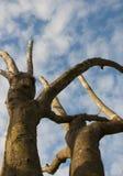 Ουρανός κάτω από το δέντρο Στοκ εικόνα με δικαίωμα ελεύθερης χρήσης