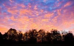 Ουρανός και δέντρα ηλιοβασιλέματος Στοκ Φωτογραφία