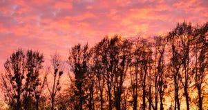 Ουρανός και δέντρα ηλιοβασιλέματος Στοκ φωτογραφία με δικαίωμα ελεύθερης χρήσης