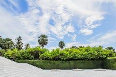 Ουρανός και δέντρο της Νίκαιας Στοκ Εικόνες