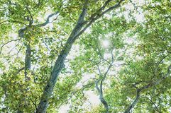 Ουρανός και δέντρο Στοκ Φωτογραφίες