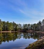 Ουρανός και δέντρα που απεικονίζονται θερινοί στο νερό λιμνών στοκ εικόνες