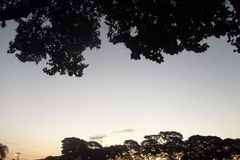 Ουρανός και δέντρα στο σούρουπο Στοκ Εικόνα