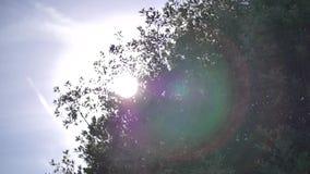 Ουρανός και δέντρα απόθεμα βίντεο