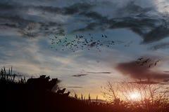 Ουρανός και σύννεφα ηλιοβασιλέματος πουλιών σκιαγραφιών απεικόνισης Στοκ Εικόνες