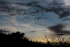 Ουρανός και σύννεφα ηλιοβασιλέματος πουλιών σκιαγραφιών απεικόνισης Στοκ Φωτογραφία