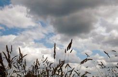 Ουρανός και χλόες Στοκ φωτογραφίες με δικαίωμα ελεύθερης χρήσης